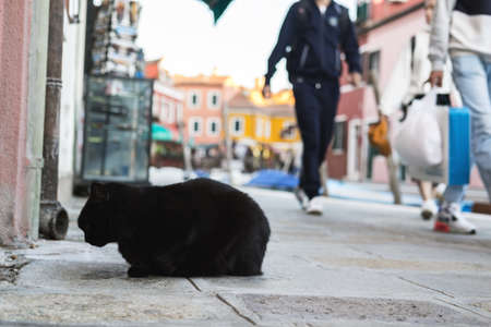 Homeless cute cat lies on the street and rests. Italy, Venice. The problem of homeless animals in cities. Reklamní fotografie