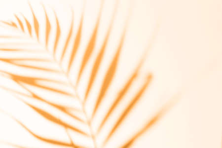 Abstract orange clean background with shadow from palm leaves. Marigold color shadow photo overlay. Tropical tree leaves. Blurred trendy 2021 texture with copy space and mockup.