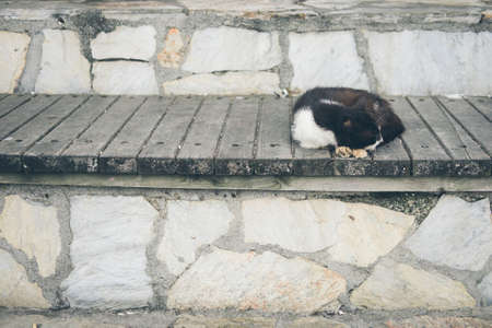 Homeless cute adult black and white tuxedo cat lies on the stones by the sea and sleeps, rests. Turkey, Istanbul. The problem of homeless animals in cities.