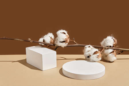 Empty white round and rectangular podium with shadows and branch of cotton on beige natural background. Wabisabi style, earth tone. Mockup for presentation of eco or organic products, cosmetics. Reklamní fotografie