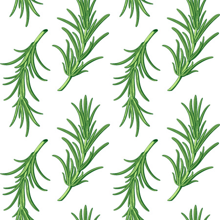 Rosemary branches vector pattern. Isolated. Retro style.
