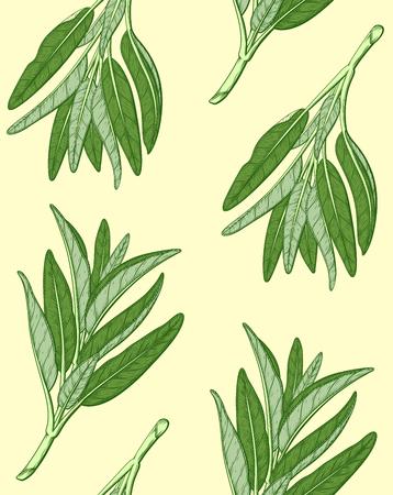 Sage or Salvia pattern. Ink sketch vector illustration. Retro style.