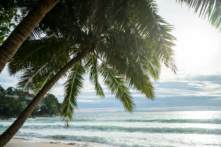 Coconut palm trees were over bright sky background,Phuket. Stock Photo