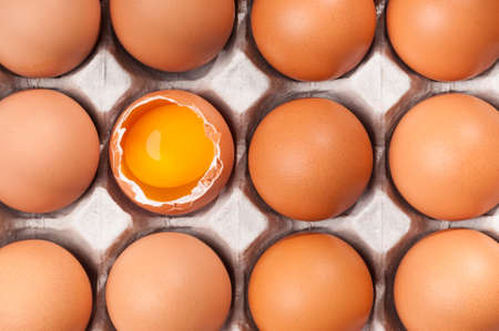 protein crops: Eggs in egg packaging background