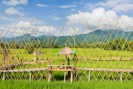 Rice farm with farmers hut, countryside of Thailand