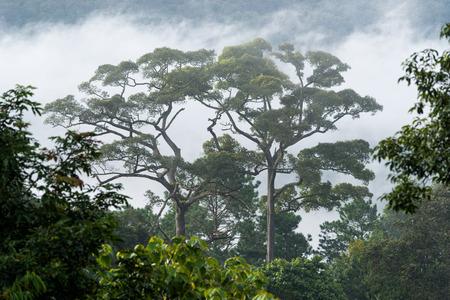 Morning fog in dense tropical rainforest
