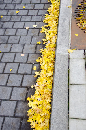 Fallen yellow maple leaves on pavement on a cold afternoon during fall/autumn Imagens - 112625726