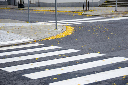 Fallen yellow maple leaves on pavement and crosswalk on a cold afternoon during fall/autumn 免版税图像 - 112625729