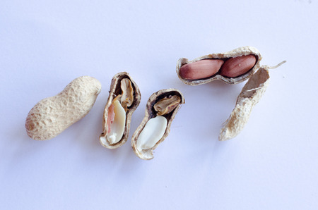 Peanuts on display on white background. One of them cracked with one bad and one good peanut.