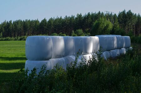 A group of bales with hay fermenting on the meadow Stockfoto