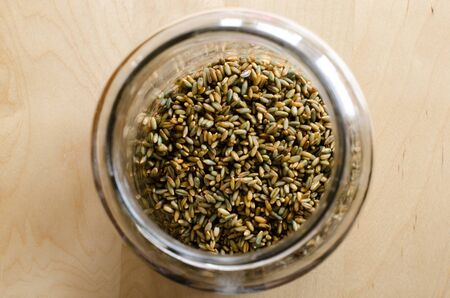 A jar filled with whole rye grains ready for malting on a wooden table. Stockfoto