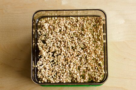 Buckwheat sprouts in the making. Focused background. Day 1 Stockfoto