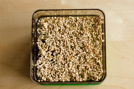 Buckwheat sprouts in the making. Unfocused background. Day 1 Stockfoto