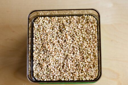 Buckwheat sprouts in the making. Unfocused background. Day 2 Stockfoto