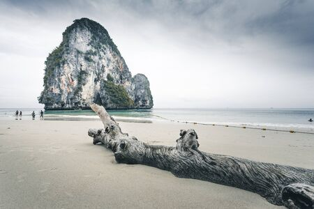 trunk at railay beach in Krabi province Thailand with rock in the background 写真素材