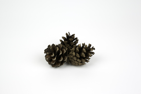 pinecone: Pinecone on white background.