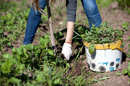 Woman working garden with a hoe. Hobbies and ecological living background Stock Photo