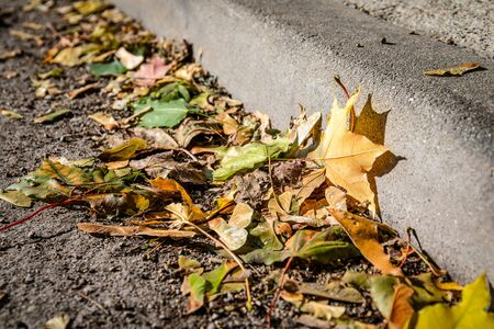 Colourful autumn leaves on the street. Pedestrian streets and driveway
