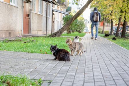 A group of street cats. Apartment yard with pedestrian walkway