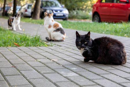 Three street cats. Apartment yard with pedestrian walkway