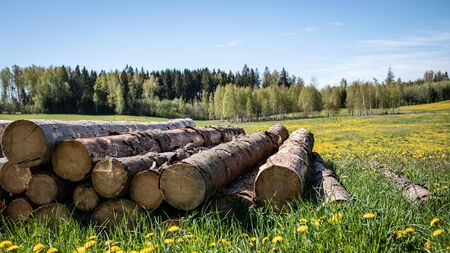 Saw logs stacked in a pile. Green meadow with yellow dandelions