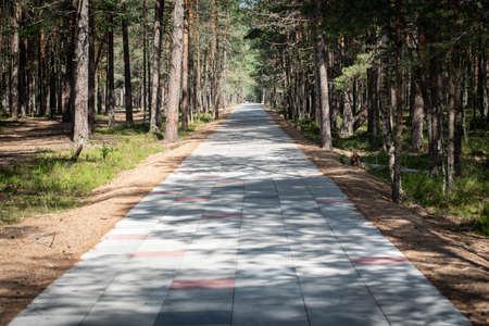 Nature trail. Paved walkway in the woods. Park and active recreation