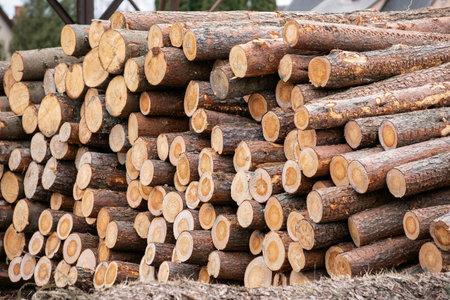 Log Stack. Timber Production, Transportation and Deliver