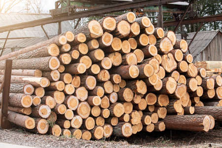 Factory and Industry. Log Stack. Timber Production, Transportation and Deliver 版權商用圖片