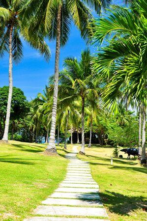sylvan: Pathway in coconut tree with blue sky Stock Photo