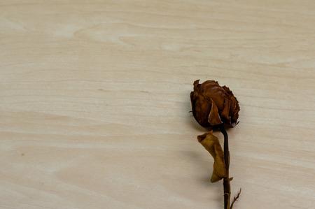 saint valentin coeur: rose s�ch�e sur fond de bois avec copie espace