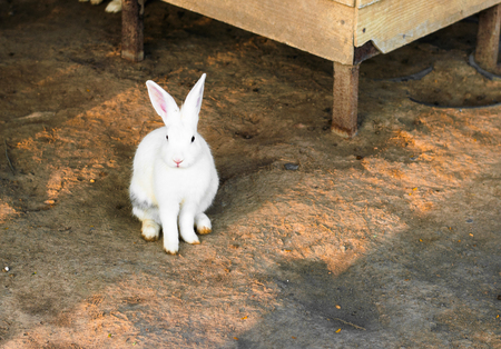 rabbit in cage: cute white rabbit on the ground in the cage Stock Photo