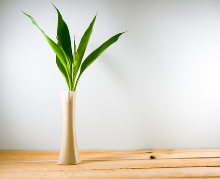 lucky bamboo: Lucky bamboo (Dracaena sanderiana) in a crean vase on wood backgrond. copy space for text