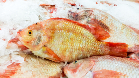 Red tilapia fish on shelf with ice for sell in supermarket