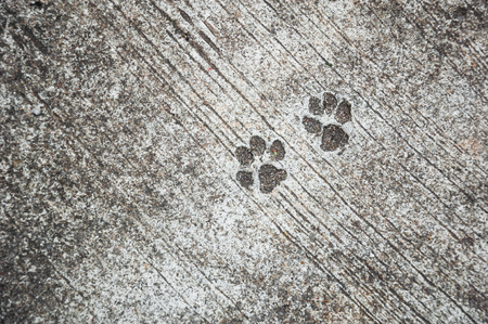 mutts: footprint of dog on the concrete rough floor or ground
