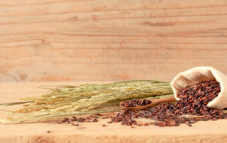 brown raw rice in sack bag with dried rice plant on wooden table background.
