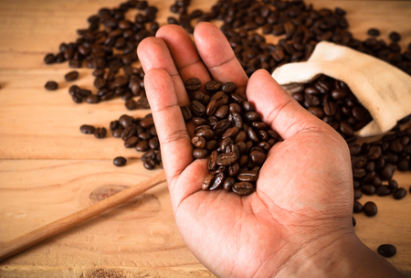 hand hold coffee bean over bean and sack on wooden table Standard-Bild