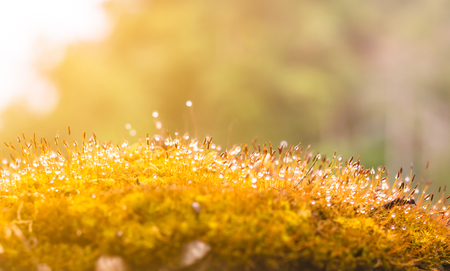 Ferns or mosses on trunk and dew drops in the forest with sunlight