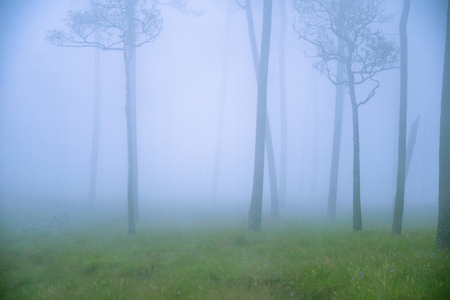 fog or mist on tree in the forest.