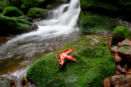 Red maple on green moss cover rock in waterfall.