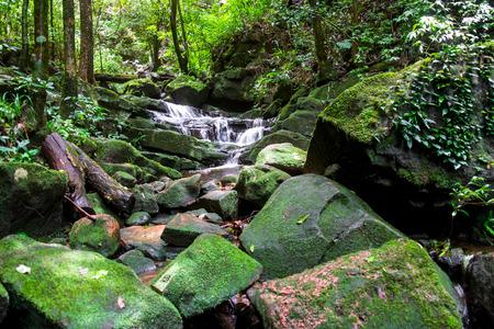 Waterfall among nature green moss and rock.