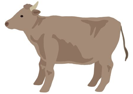 beef cattle for the domestic animal