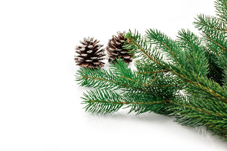 Pine branches with pine cones on white