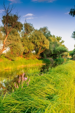 salmon falls: Wooded riverside landscape in Hungary
