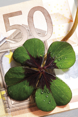 multiplying: Four-leafed clover on 50 Euro banknote, close-up, elevated view