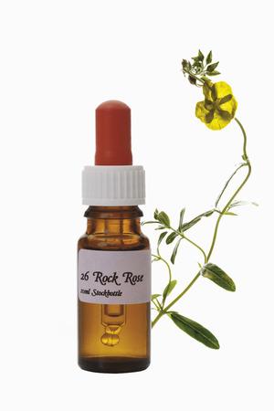 Bouteille avec Fleur de Bach Stock Remedy, Rock rose (Cistaceae) Banque d'images