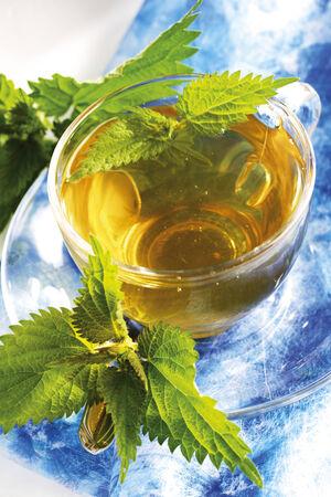 stinging nettle: Stinging nettle tea