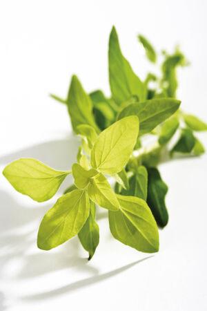 wild marjoram: Gold oregano,Oreganum vulgare, Wild marjoram Stock Photo