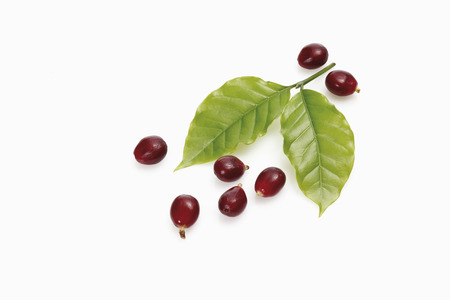 Fresh coffee beans with leaves photo