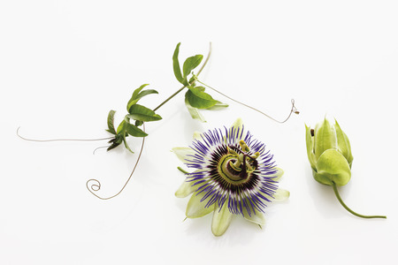 phytotherapy: Passion flower