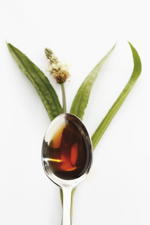 phytotherapy: Ribwort plantain with a spoon of cough syrup on white background
